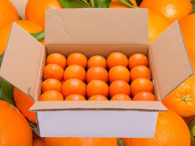 carton oranges